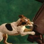 Как правильно вести себя при нападении собаки?