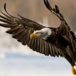 Почему  летают птицы?