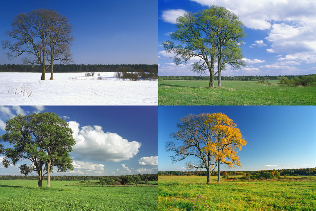 4Seasons-web